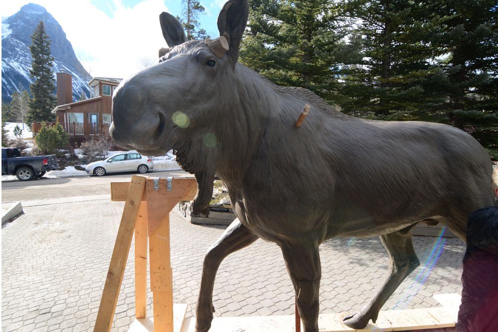 moose-3