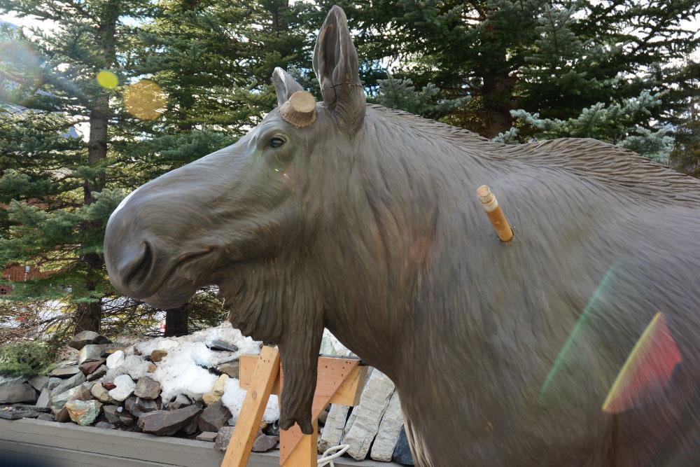moose-8